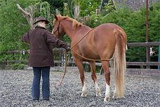Equine Behaviour France