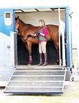 Equine Behaviour Consultant
