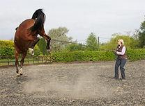 Equine Behaviourist UK, Equine Behaviourist France