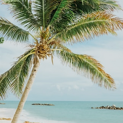 TopDestinations-KeyWest-450px.png
