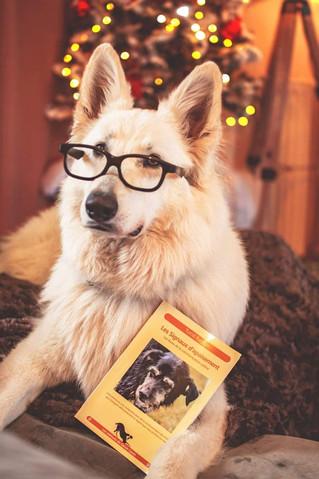 La communication du chien