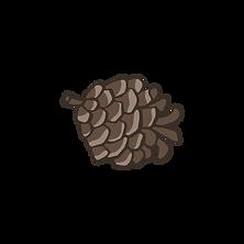 Pine Cone 4