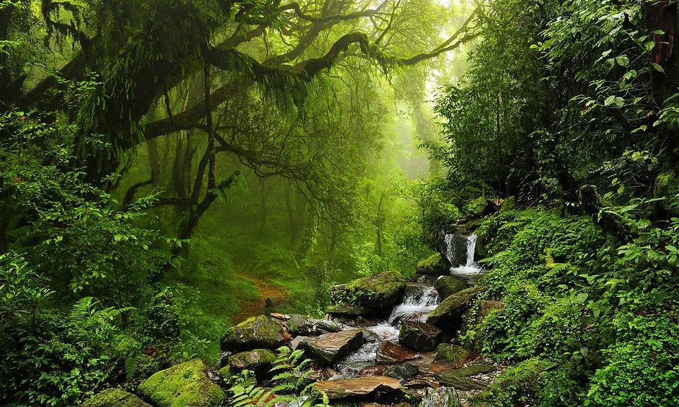 tropisch-regenwoud-2000x1200.jpg