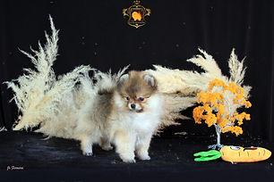femea disponivel laranja.jpg
