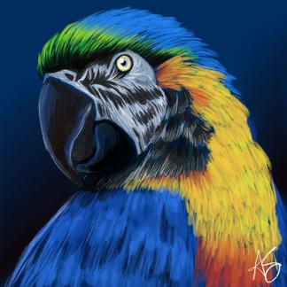 macaw1.jpg