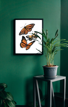 Butterfly Craze