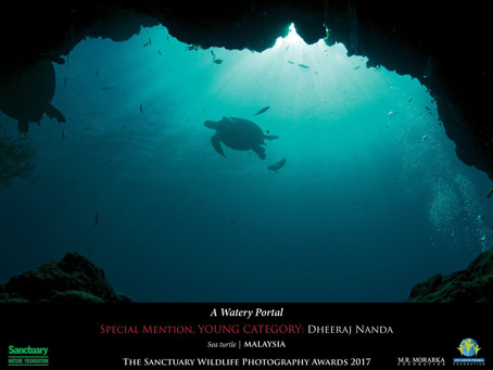 Youngest Indian Underwater Photographer with highest number of awards