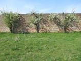 Craig Lodges, Linlithgow. Walled garden.
