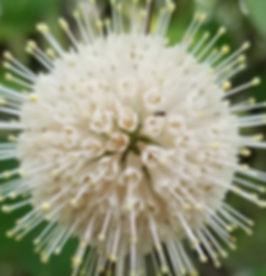 flowerwhite_edited.jpg