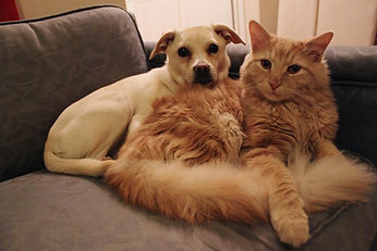dog and cat on couch.jpg