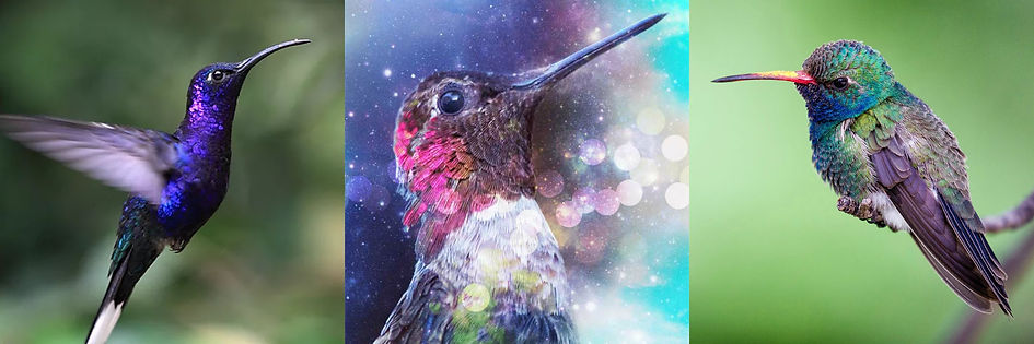 Hummingbird Collage.jpg