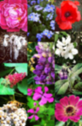 web-How-to-use-Flower-Essence-Collage.jp