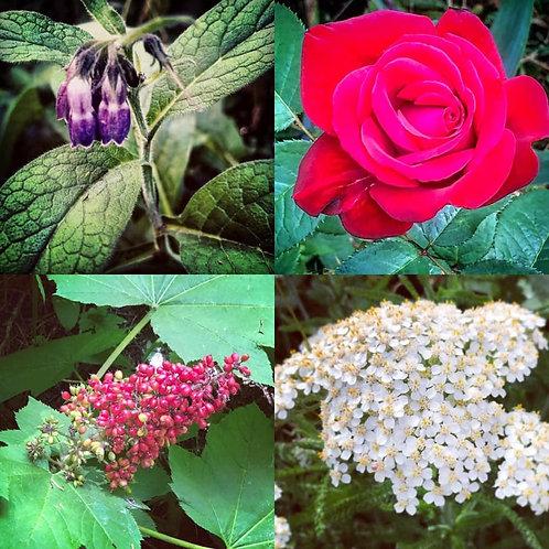 Aura Shield Flower Essence