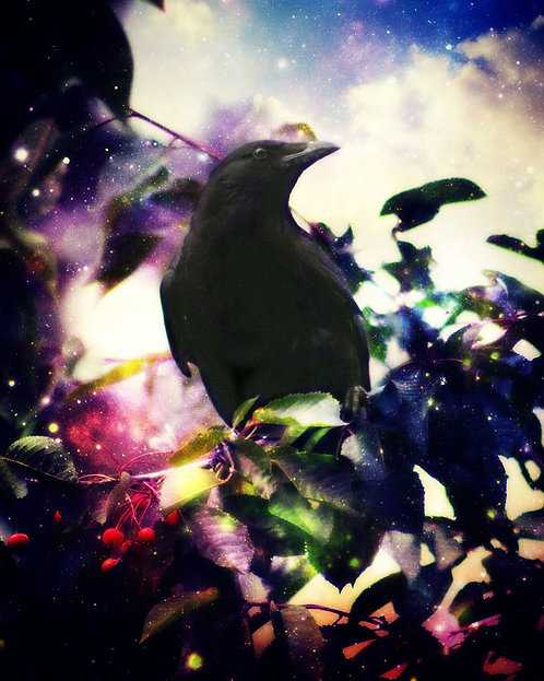 Cosmic Cherry Crow