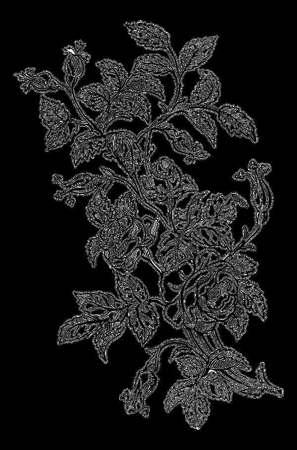 fade-Ornamental-Roses-botanical-Design-G