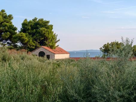 A Croatian Odyssey