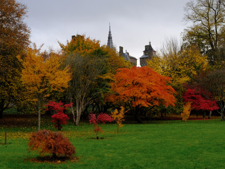 Top 5 Things to See and Do in Bute Park, Cardiff