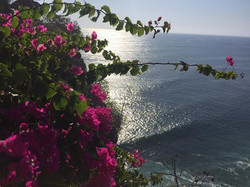 flowers and the indian ocean