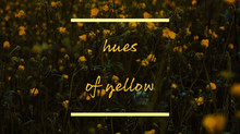 Hues of Yellow