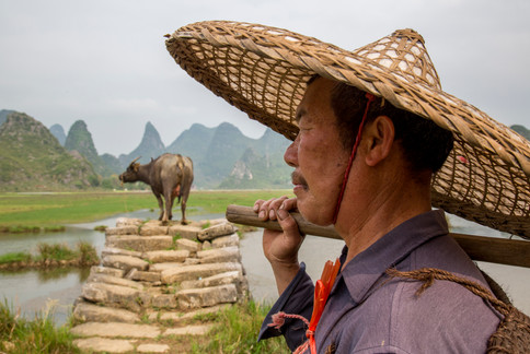 """Amazing Guilin photography tour: local farmer with his buffalo yangshuo china."""