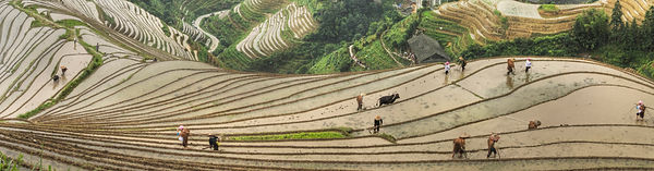 """Amazing Guilin photography tour: local farmers at pingan village longji rice terraces longsheng china."""