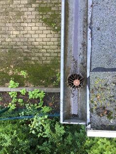 Dachrinnenreinigung Berlin