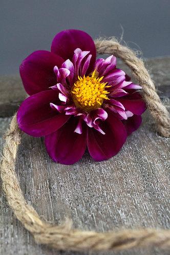 Blume auf Kiste
