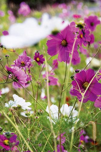 Blumenwiese02