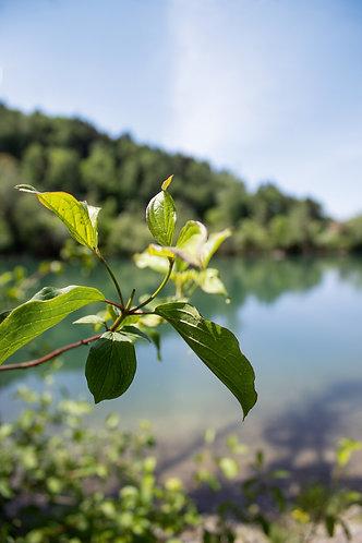 Foto Blätter Gewässer