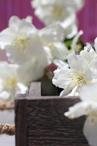Blumen05