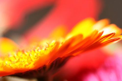 Blumen04
