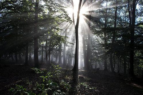 Wald Licht_01 quer