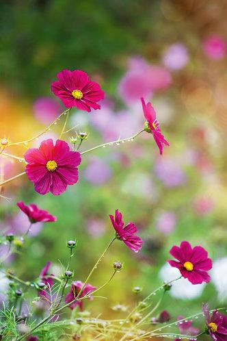 Blumenwiese03