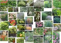 Une palette de végétaux, des harmonies de couleurs
