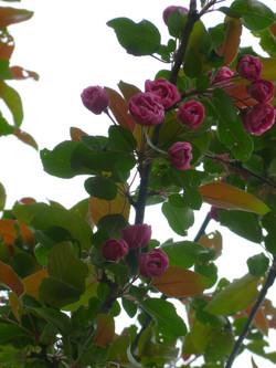 2014 花樹