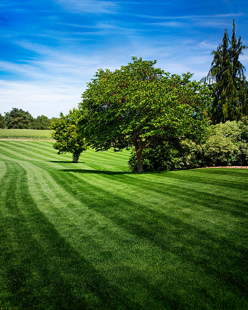 Want This Lawn No text.jpg