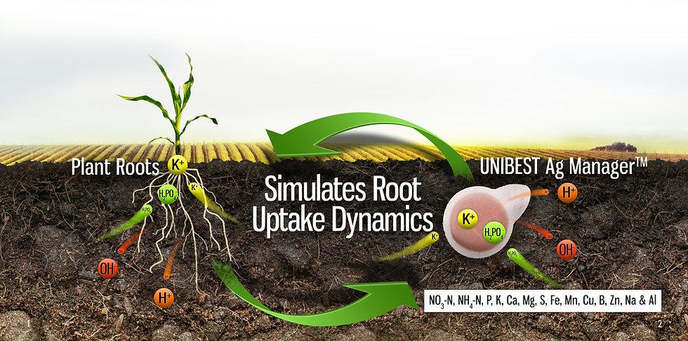 Simulates Plant Root Uptake.jpg