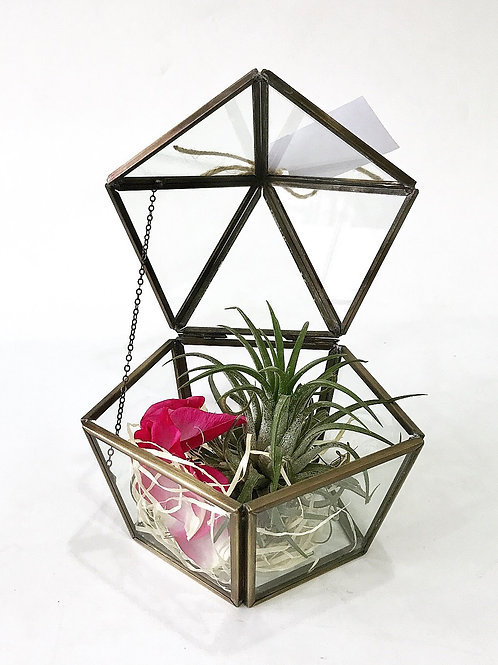 Terrarium with Airplant (1)