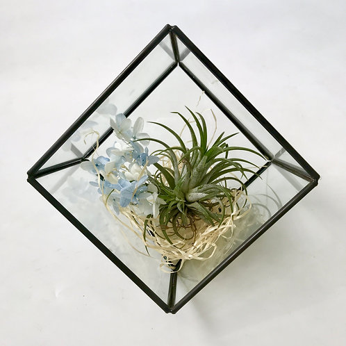 Terrarium with Airplant (3)