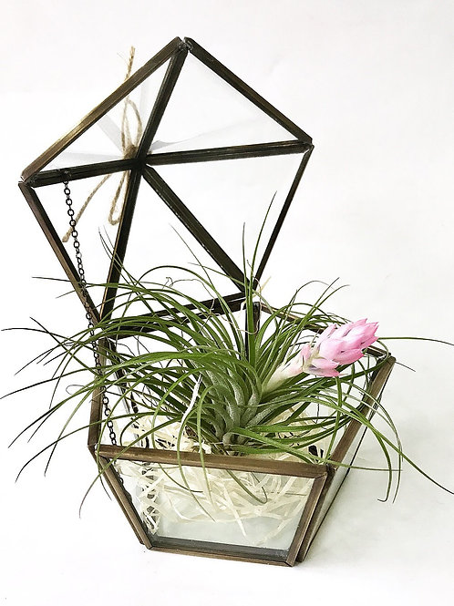 Terrarium with Airplant (2)