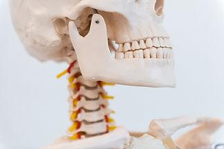 Skelett Titus
