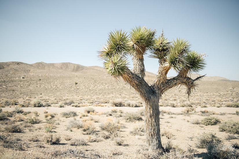 Adam Crews Imagery, Adam Crews, Adam Crews Photography, California Desert, USA, Desert, Joshua Tree