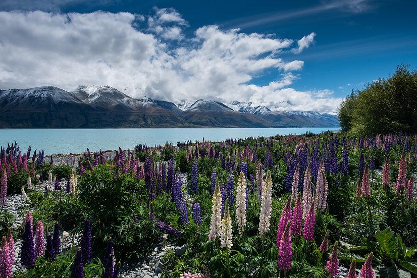 Adam Crews Imagery, Adam Crews, Adam Crews Photography, New Zealand, Mountains, Clouds, Lupins, Lake Pukaki, snow