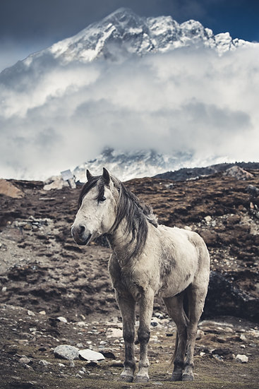Mount Everest Region, Himalaya, Nepal, Mountains, Horse, trekking, Sagarmatha National Park