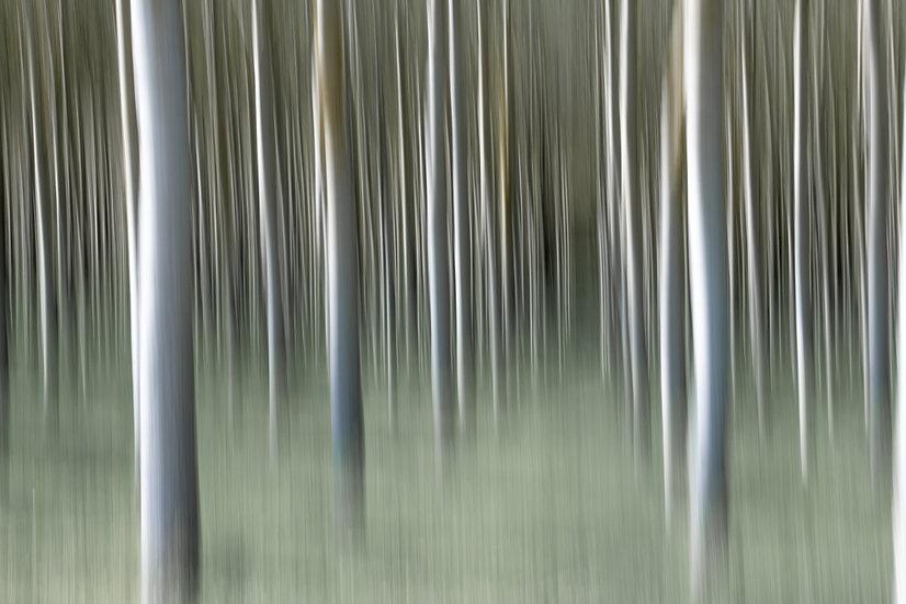 Tuscan Grove 1