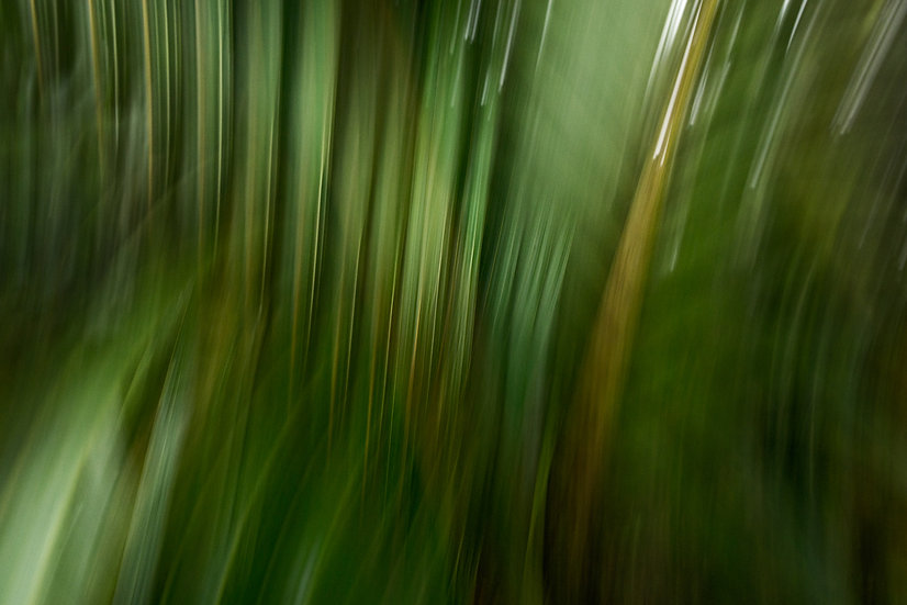 Rainforest Melody