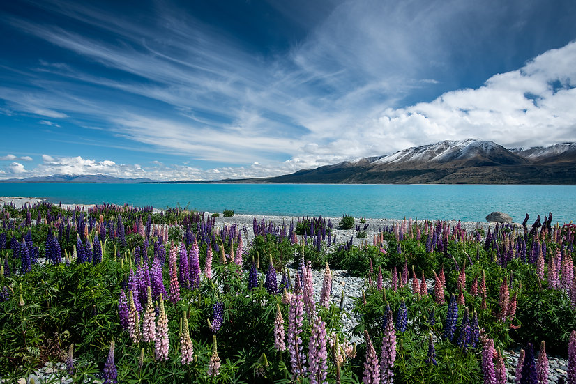 Adam Crews Imagery, Adam Crews, Adam Crews Photography, New Zealand, Mountains, Clouds, Lupins, Lake Pukaki, snow