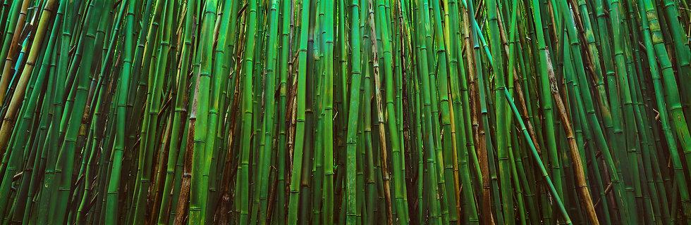Adam Crews Imagery, Adam Crews, Adam Crews Photography, Bamboo Forest, East Maui, Maui, Hawaii, USA