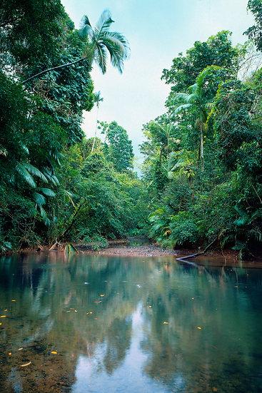 Rainforest Oasis