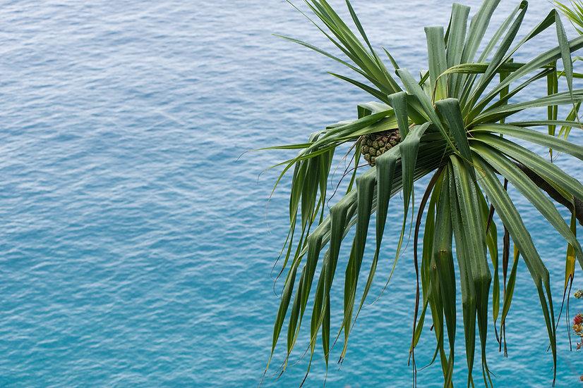 Na Pali Palm